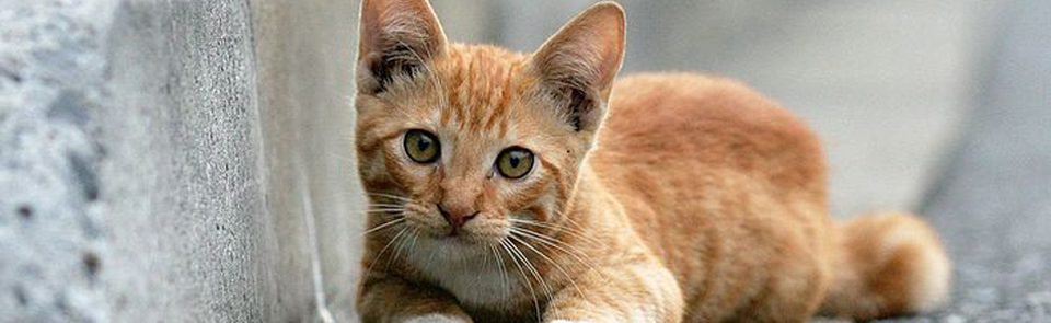 Feral cat clinic this November!