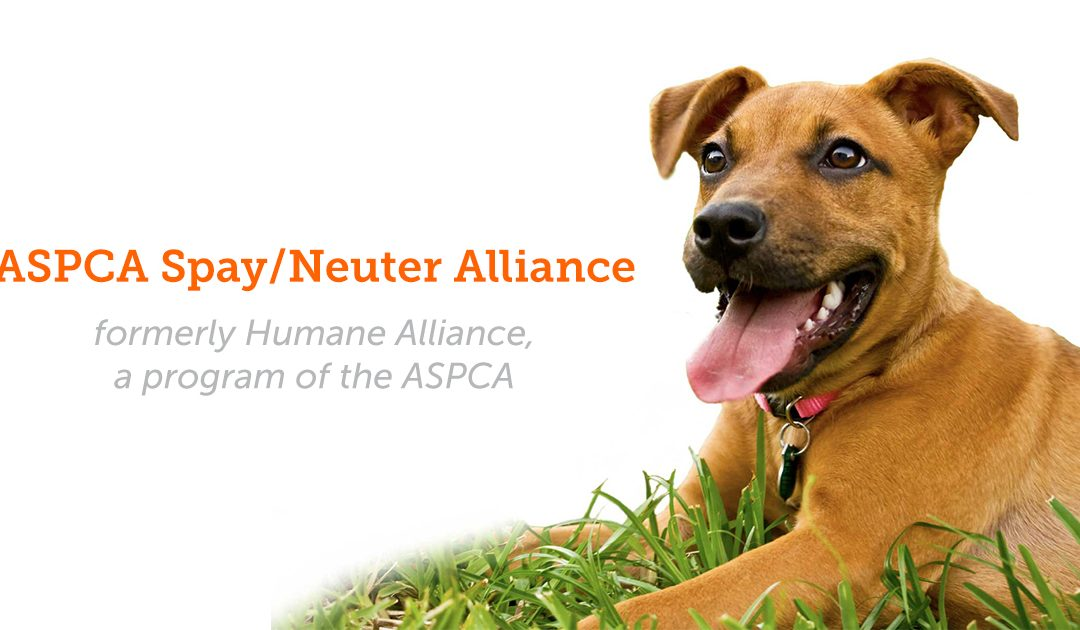 SNYP Accepted into the ASPCA Spay/Neuter Alliance